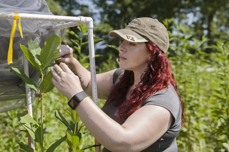 Rebekah Grimes examines aphids on a milkweed plant at the Claytor Nature Study Center this summer.