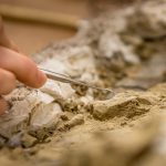 Close up photo of a hand holding an air chisel and applying it to a fossil covered in rock.