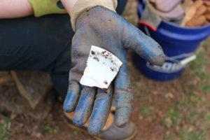 Whiteware ceramics found at Sandusky