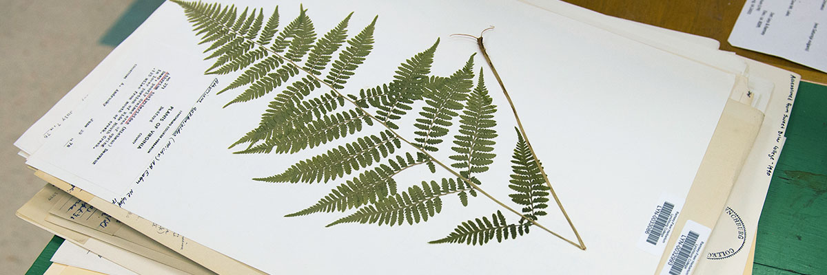 One of the many specimens at the Ramsey-Freer Herbarium at Claytor Nature Center