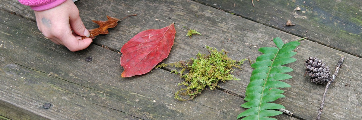 A presentation of different leaves on wood decking
