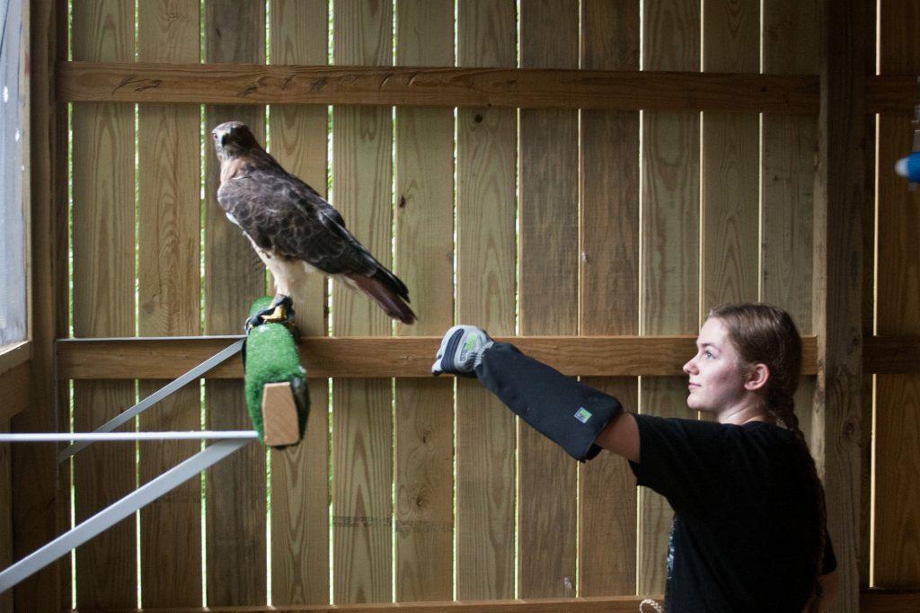 Spangler and hawk
